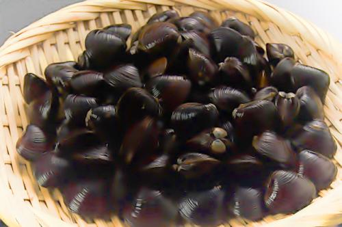 肝臓をいたわる栄養素が豊富なシジミ