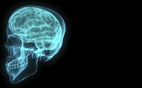 自分の脳を想像する